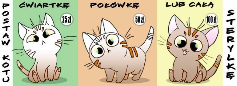 Pomóż bezdomnym kotom i wesprzyj akcję sterylkową!