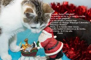 Kocie listy do św Mikołaja :)