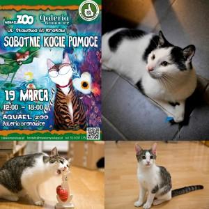 Kwesta Aquael Zoo Kraków 19 marca od 12 do 18 !!! Zapraszamy !!!