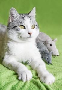 Zapraszamy na nasze stoisko na Międzynarodowej Wystawie Kotów - 4 i 5 czerwca !!!