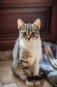 Nasze koty na Onet.pl