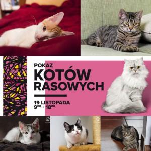Pokaz Kotów Rasowych w Galeria Bronowice  19 listopada !!!