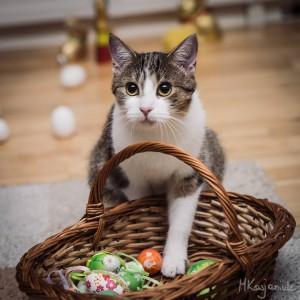 Wielkanocne koszykowanie - niech każdy zwierz śniadanko dostanie !!!